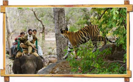 Wildlife Safari in Bandhavgarh