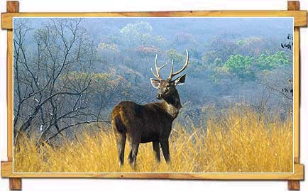 Deer at Sariska Wildlife