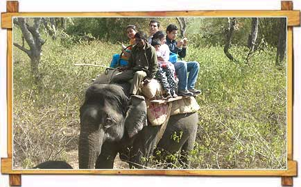 Elephant Safari in Bandipur National Park