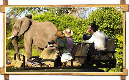 Jeep Safari in Bandipur National Park