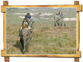 Elephant Safari in Kaziranga National Park