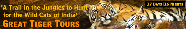 Great Tiger Tours to See the Wild Cats of India