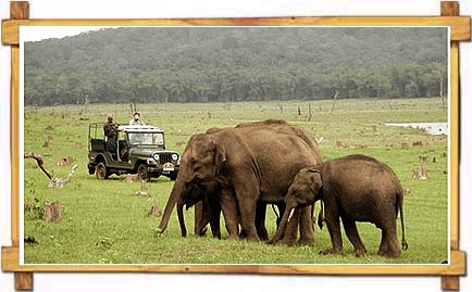 Jeep Safari at Nagarhole National Park