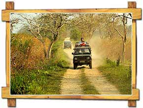 Jeep Safari Kaziranga Assam