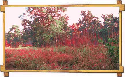 Nature in Kanha National Park