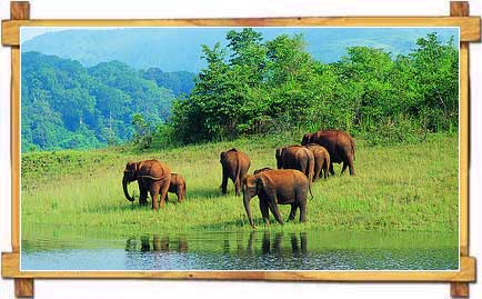 Elephants at Periyar