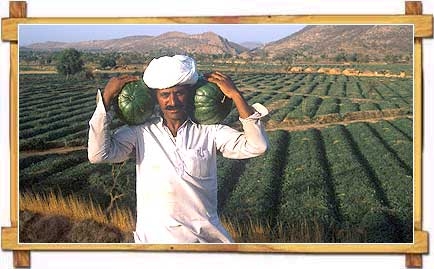 Rajasthan Farmer in the Fields
