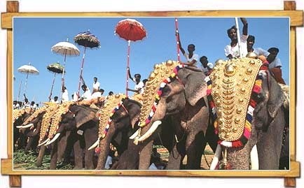 Elephants at Thrissur Pooram - Kerala