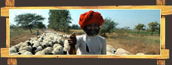 Tribal Shepherds of Madhya Pradesh