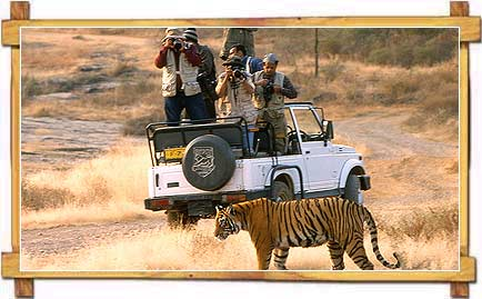 Wildlife Safari in Rajasthan